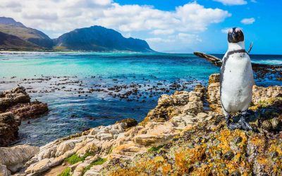 SOUTH-AFRICA-penguin