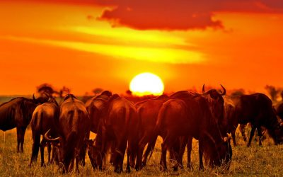 TANZANIA-wildebeast-migration-safari