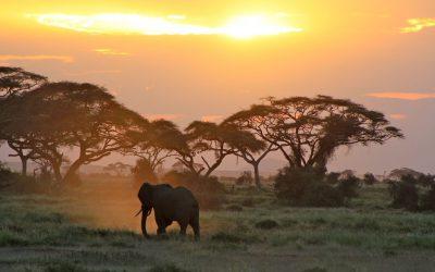 amboseli-sunset-safari-elephant-kenya